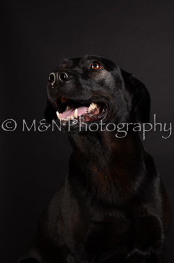 M&N Photography -DSC_5793