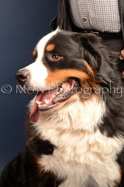 M&N Photography -DSC_4209