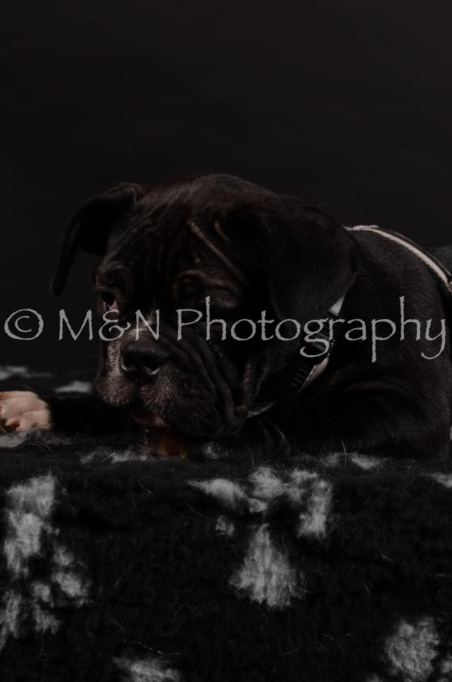 M&N Photography -DSC_5952
