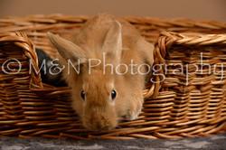 M&N Photography -_SNB0956