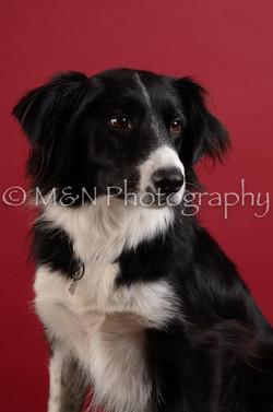 M&N Photography -DSC_3462