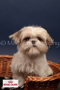 M&N Photography -DSC_4725-2
