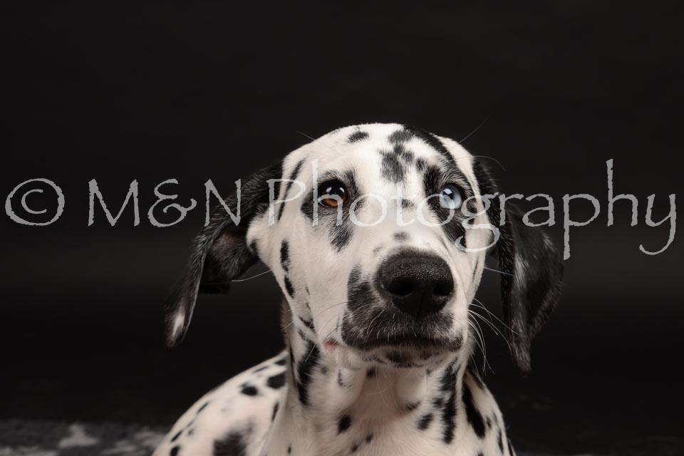 M&N Photography -DSC_9768