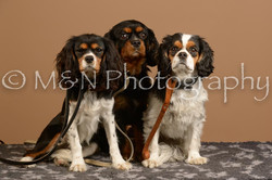 M&N Photography -_SNB0919