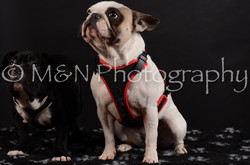 M&N Photography -DSC_5939