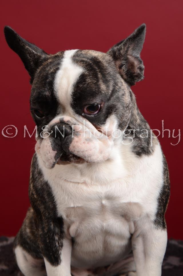 M&N Photography -DSC_3675