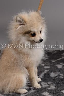 M&N Photography -DSC_2499