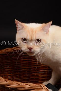 M&N Photography -DSC_9638