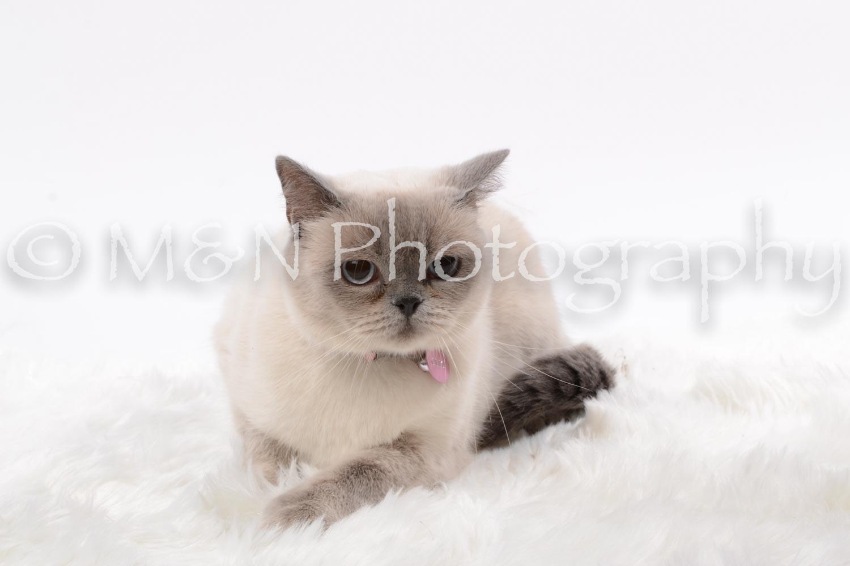 M&N Photography -DSC_8790