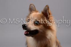 M&N Photography -DSC_2723