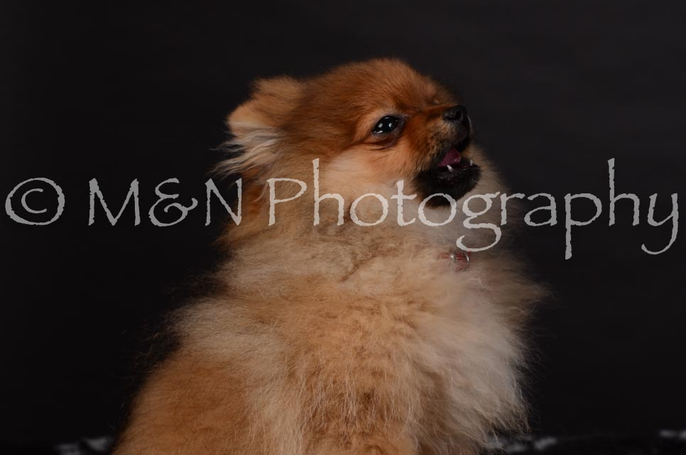 M&N Photography -DSC_5818
