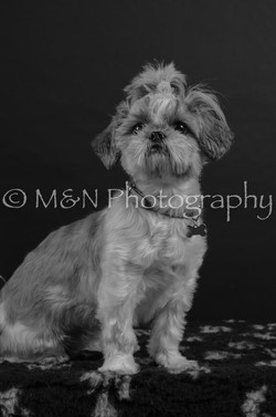 M&N Photography -DSC_5985-2