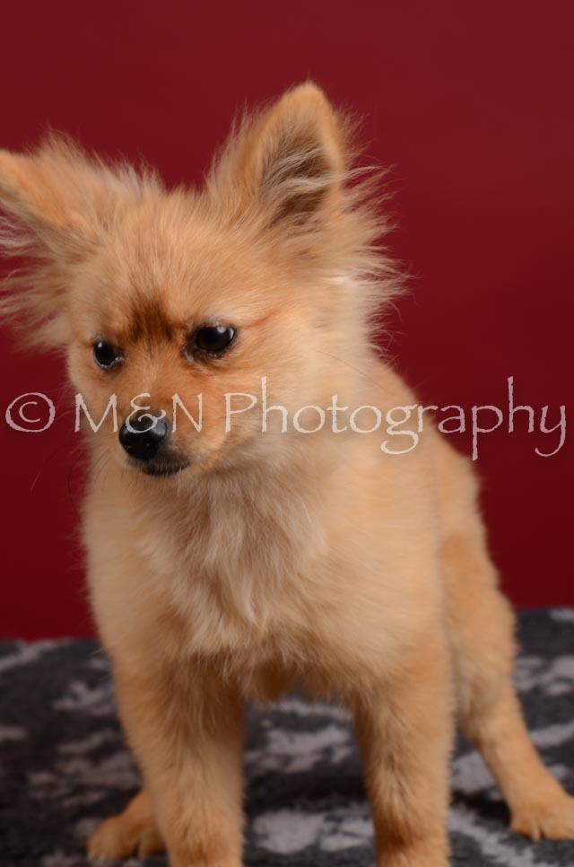 M&N Photography -DSC_3239