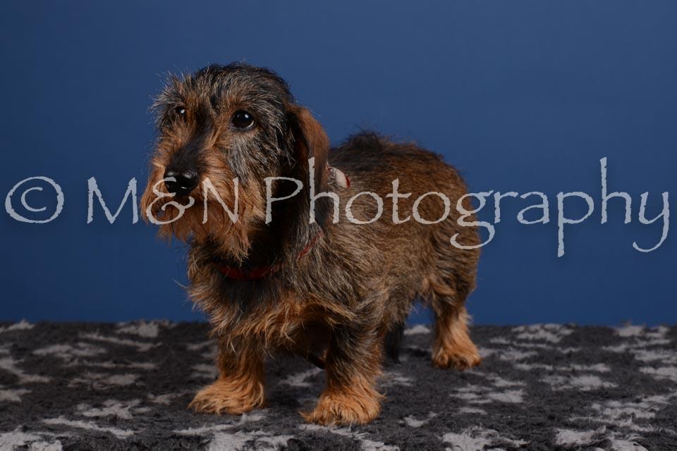 M&N Photography -DSC_5267