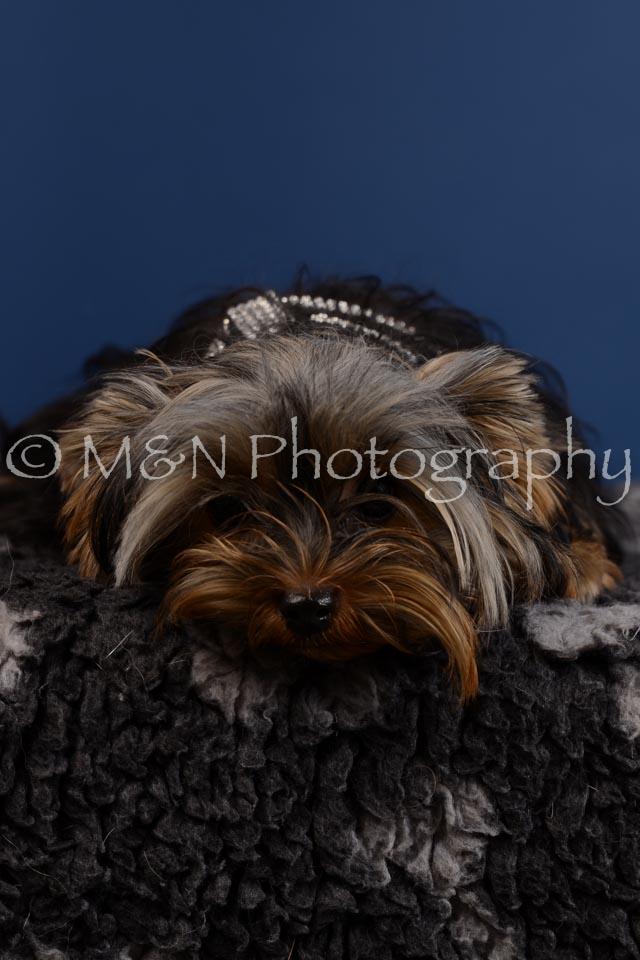 M&N Photography -DSC_5197