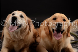 M&N Photography -DSC_9908