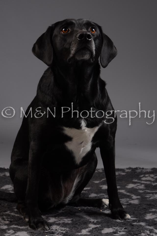 M&N Photography -DSC_2021