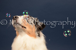 M&N Photography -DSC_3992