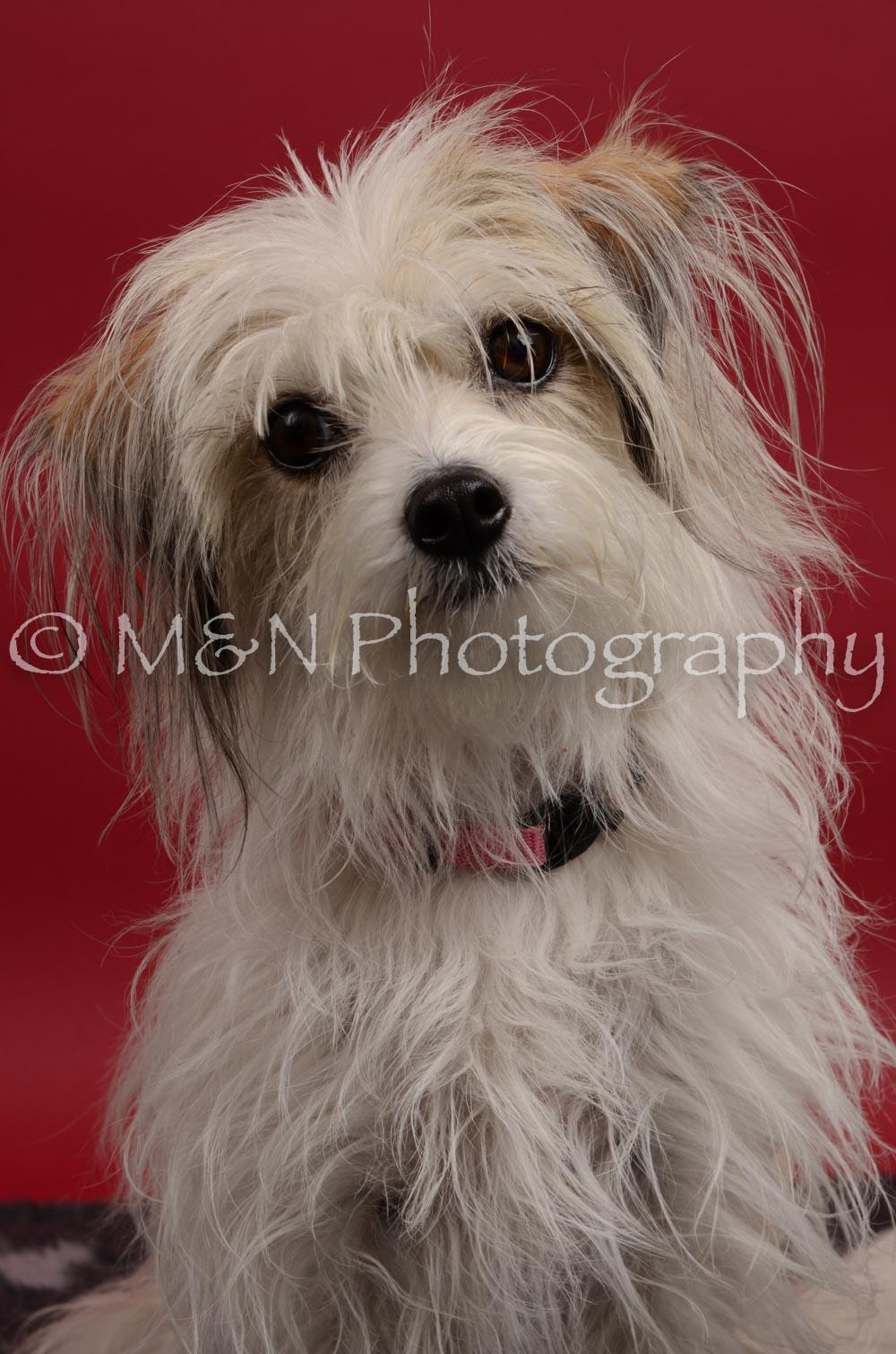 M&N Photography -DSC_8400