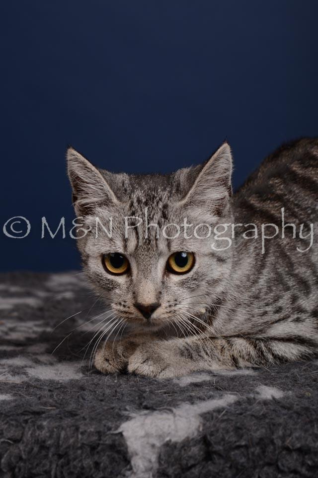 M&N Photography -DSC_4275