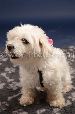 M&N Photography -DSC_0573