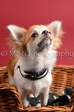 M&N Photography -DSC_8610