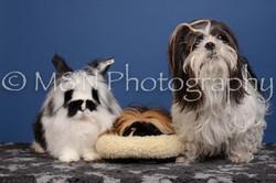 M&N Photography -DSC_5347
