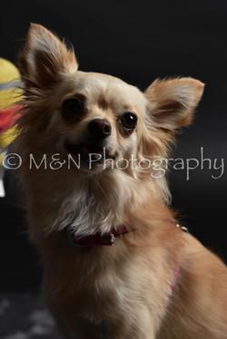 M&N Photography -DSC_2368