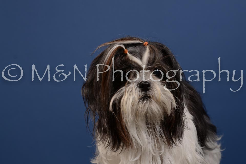 M&N Photography -DSC_5326