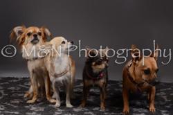 M&N Photography -DSC_2218
