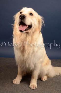 M&N Photography -DSC_4551