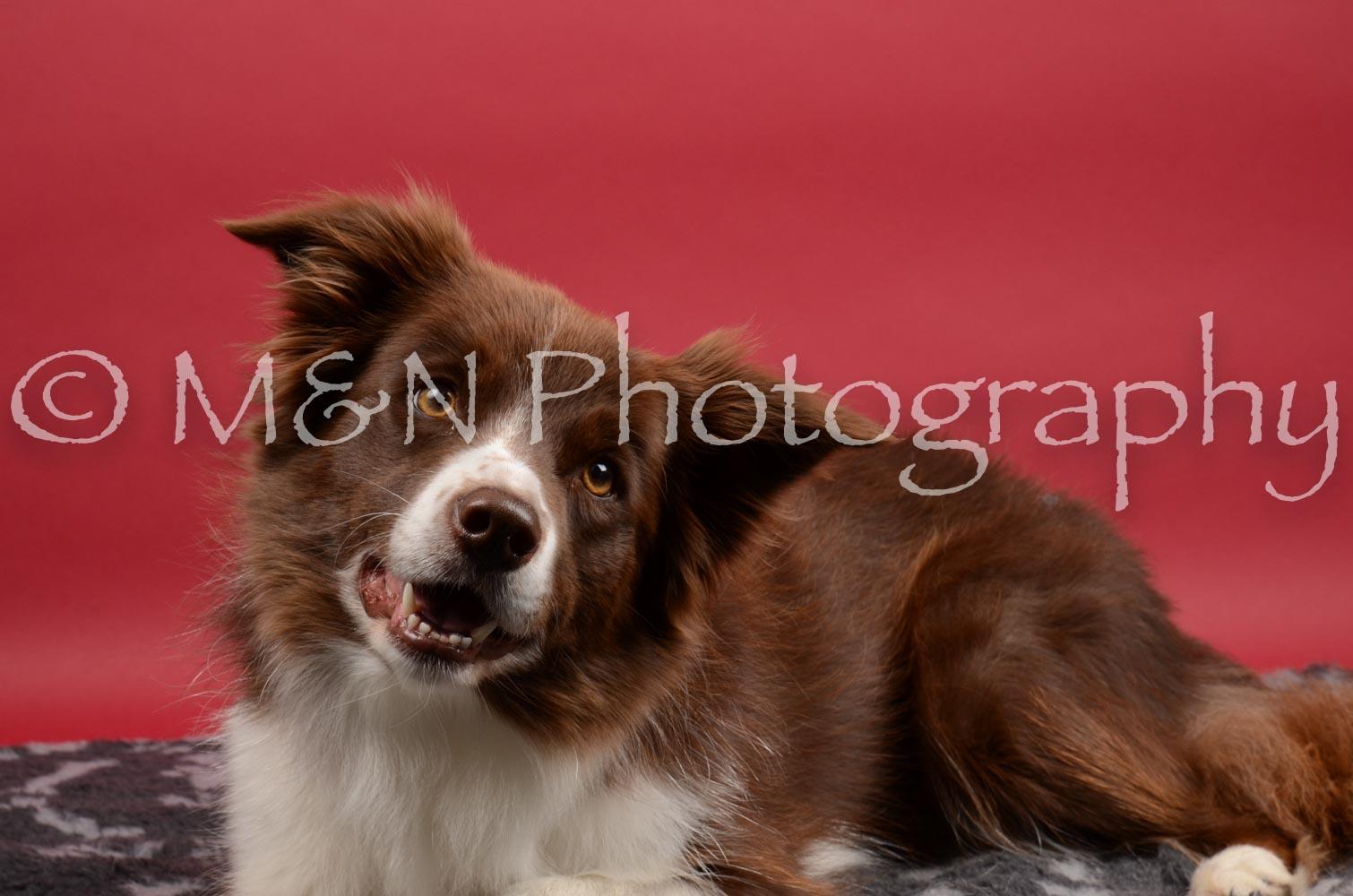 M&N Photography -DSC_8512
