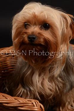 M&N Photography -DSC_9712