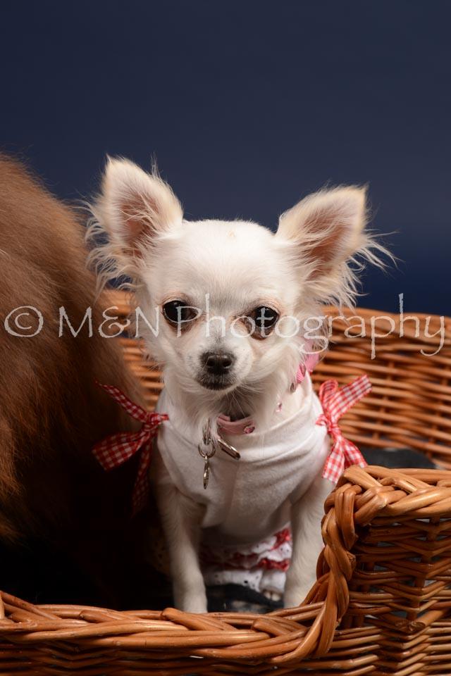 M&N Photography -DSC_0450