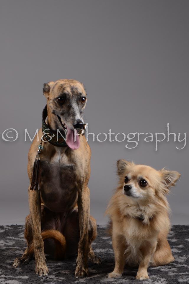 M&N Photography -DSC_1772