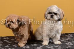 M&N Photography -DSC_4686