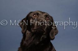 M&N Photography -DSC_4336