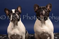 M&N Photography -IMG_4736