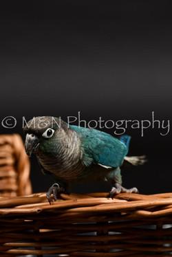 M&N Photography -DSC_2450
