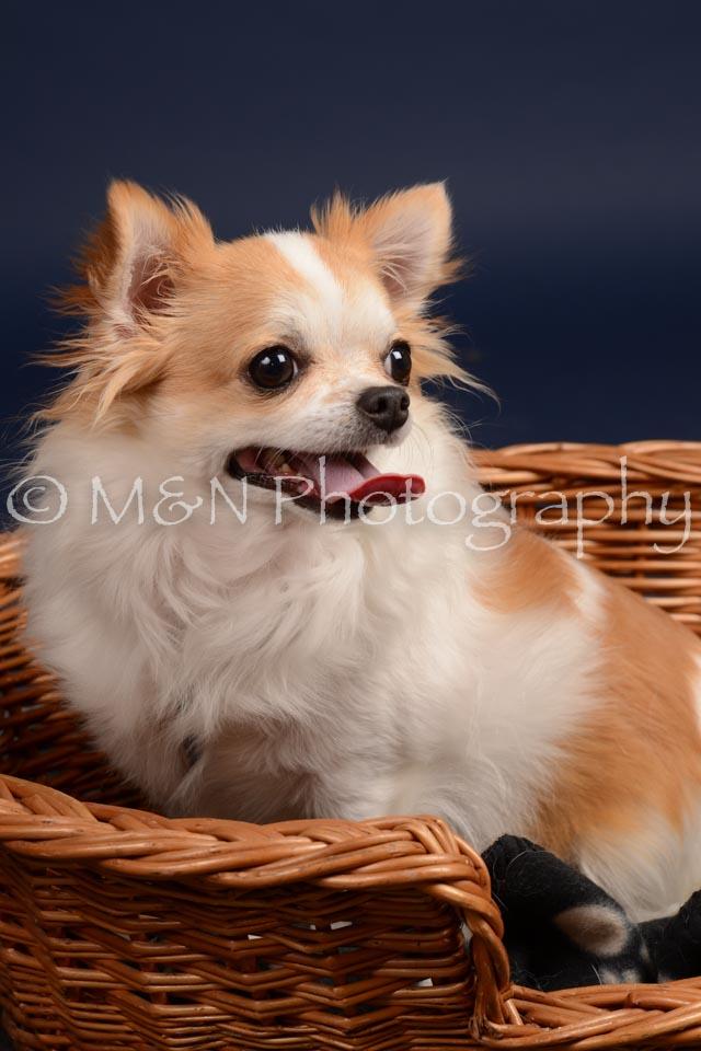 M&N Photography -DSC_0601