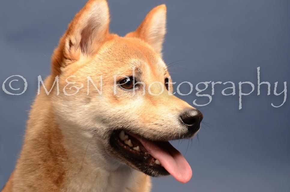 M&N Photography -DSC_4324