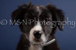 M&N Photography -DSC_3972