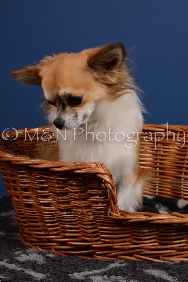 M&N Photography -DSC_4979