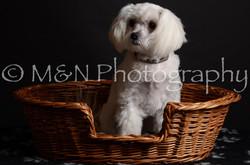 M&N Photography -DSC_5528