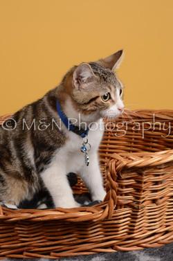 M&N Photography -DSC_4790