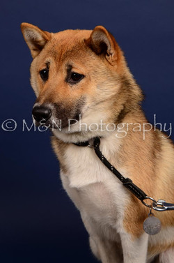 M&N Photography -IMG_4764