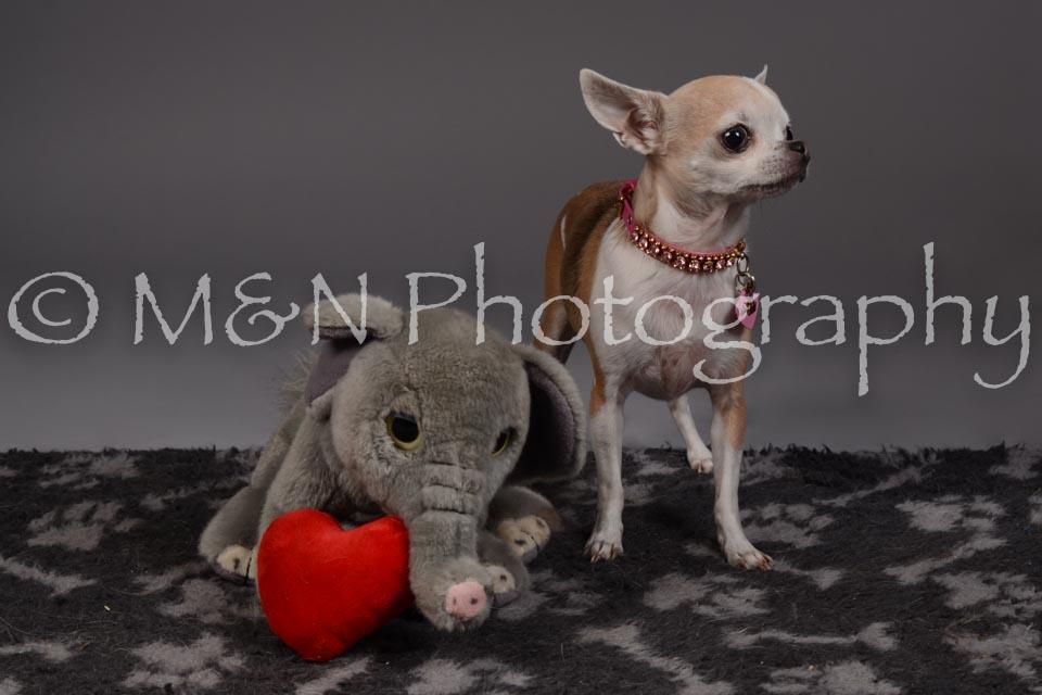M&N Photography -DSC_2193