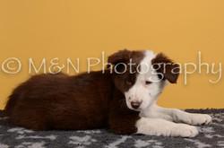 M&N Photography -DSC_4706