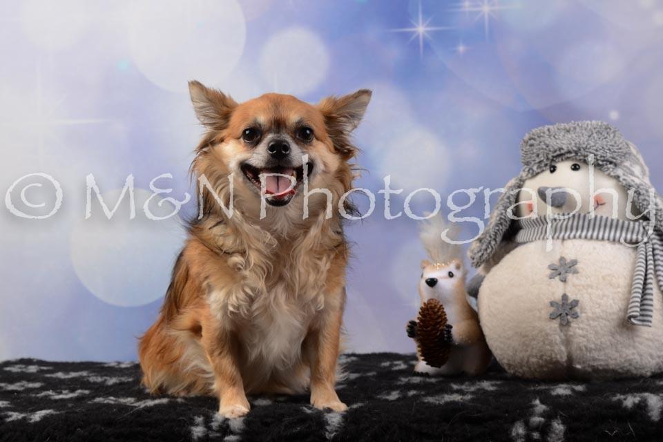 M&N Photography -DSC_6618