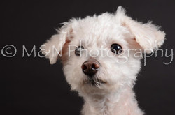 M&N Photography -DSC_5390